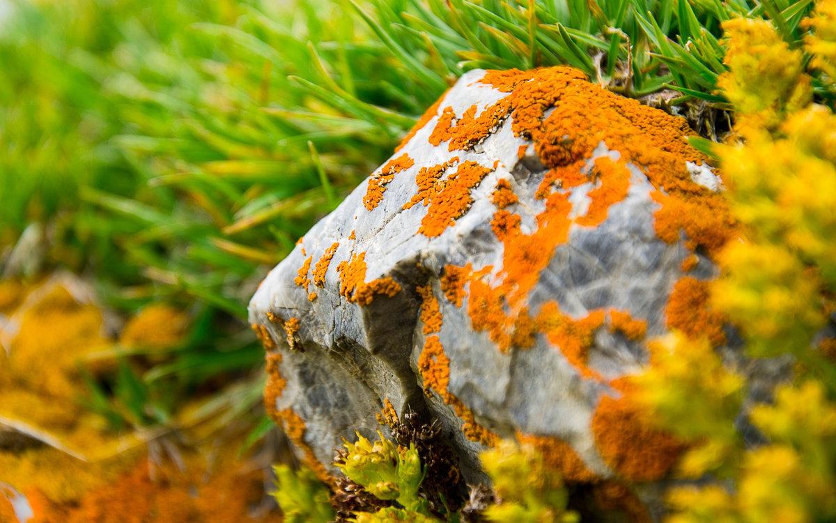 Лишайник на камне