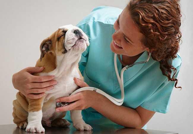 Помощь животным. Ветеринарная клиника в Тюмени