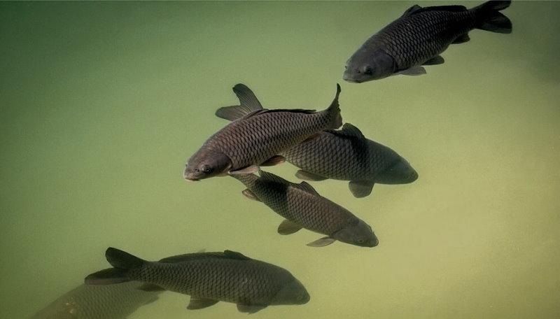 Какую рыбу лучше ловить?