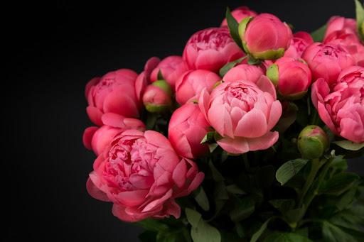 Популярные цветы у девушек с Харькова